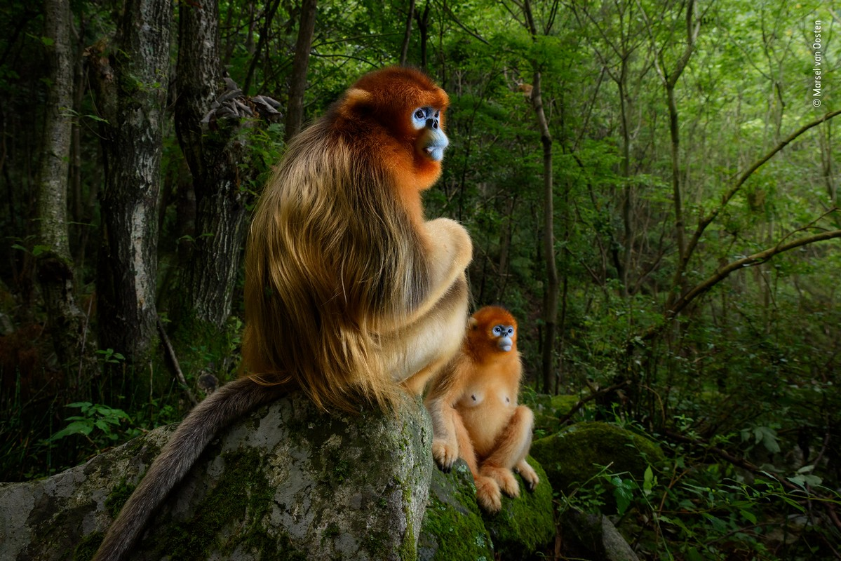 Marsel van Oosten - Wildlife Photographer of the Year