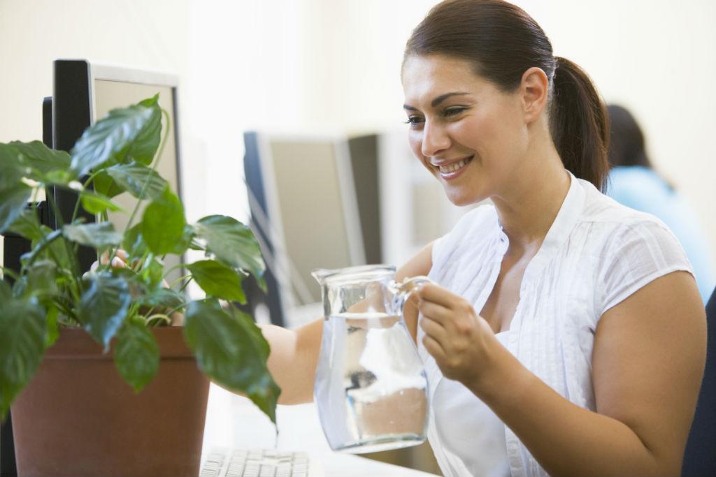 Piante Ufficio Stress : Piante in ufficio tutti dovremmo averne almeno una casafacile