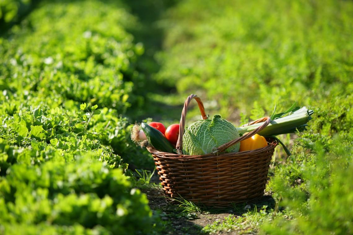 Salute E Benessere Con Prodotti Naturali I Piu Efficaci
