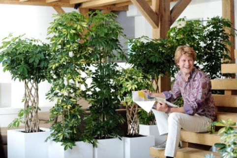 La pianta del mese la schefflera lifegate - Pianta schefflera ...