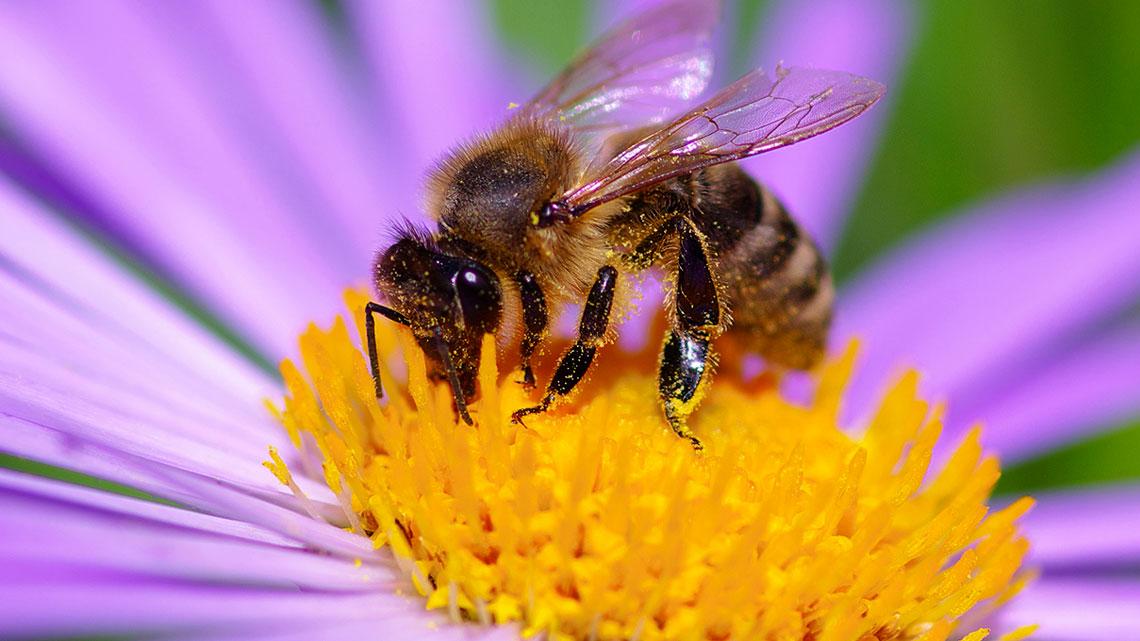 10 fatti sulla moria delle api indizi cause spiegazioni for Immagini di api per bambini