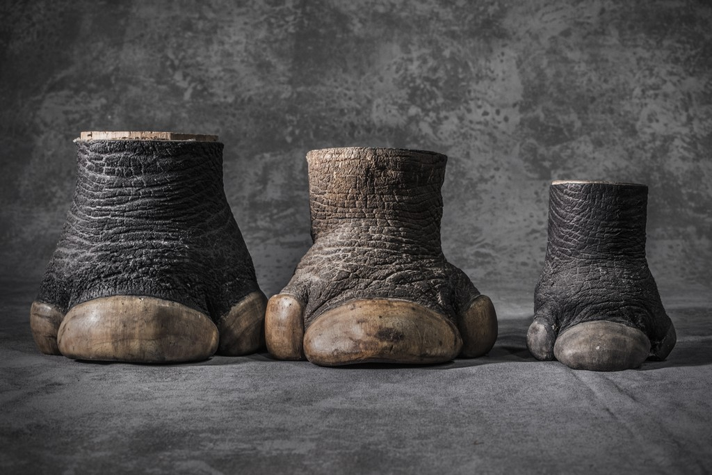 Rhino hooves – Photographers against wildlife crime