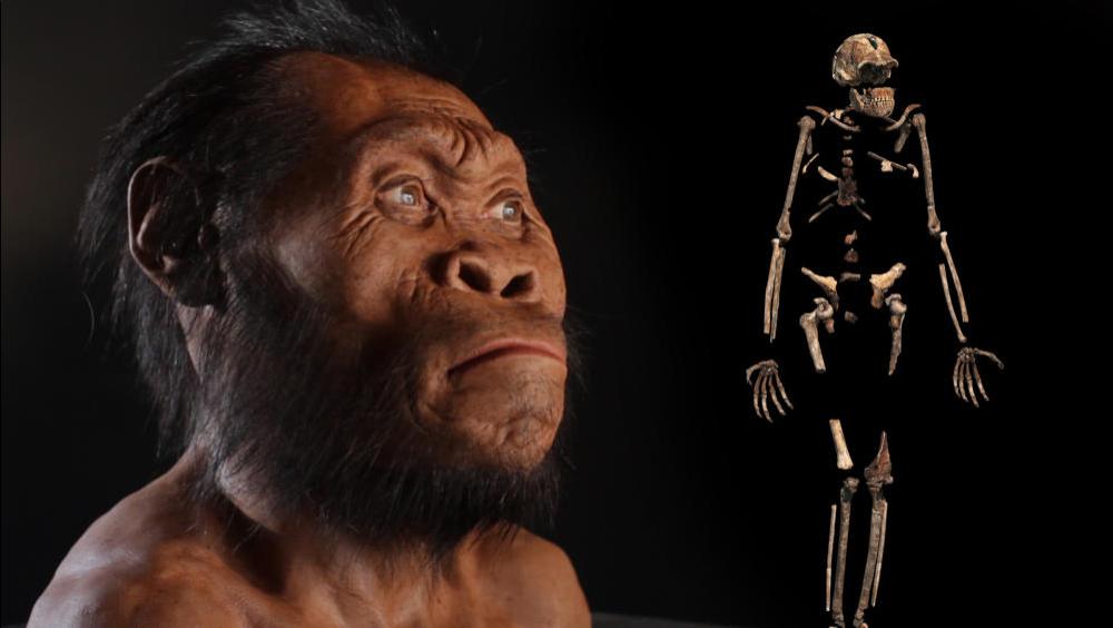 Risultati immagini per Homo Naledi