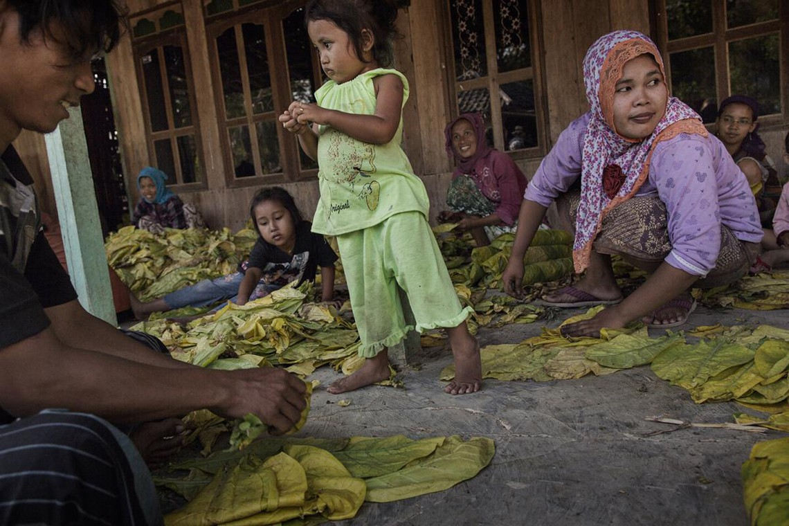Bambini e adulti smistano le foglie di tabacco a mano vicino a Sampang, East Java © 2015 Marcus Bleasdale for Human Rights Watch