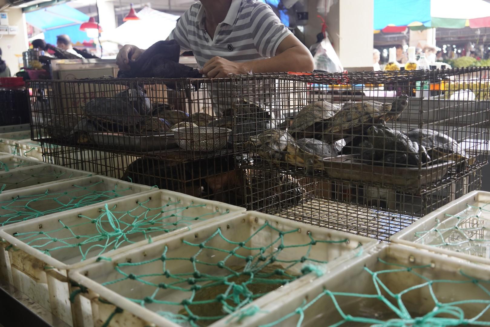 Un'immagine dai wet market in Cina