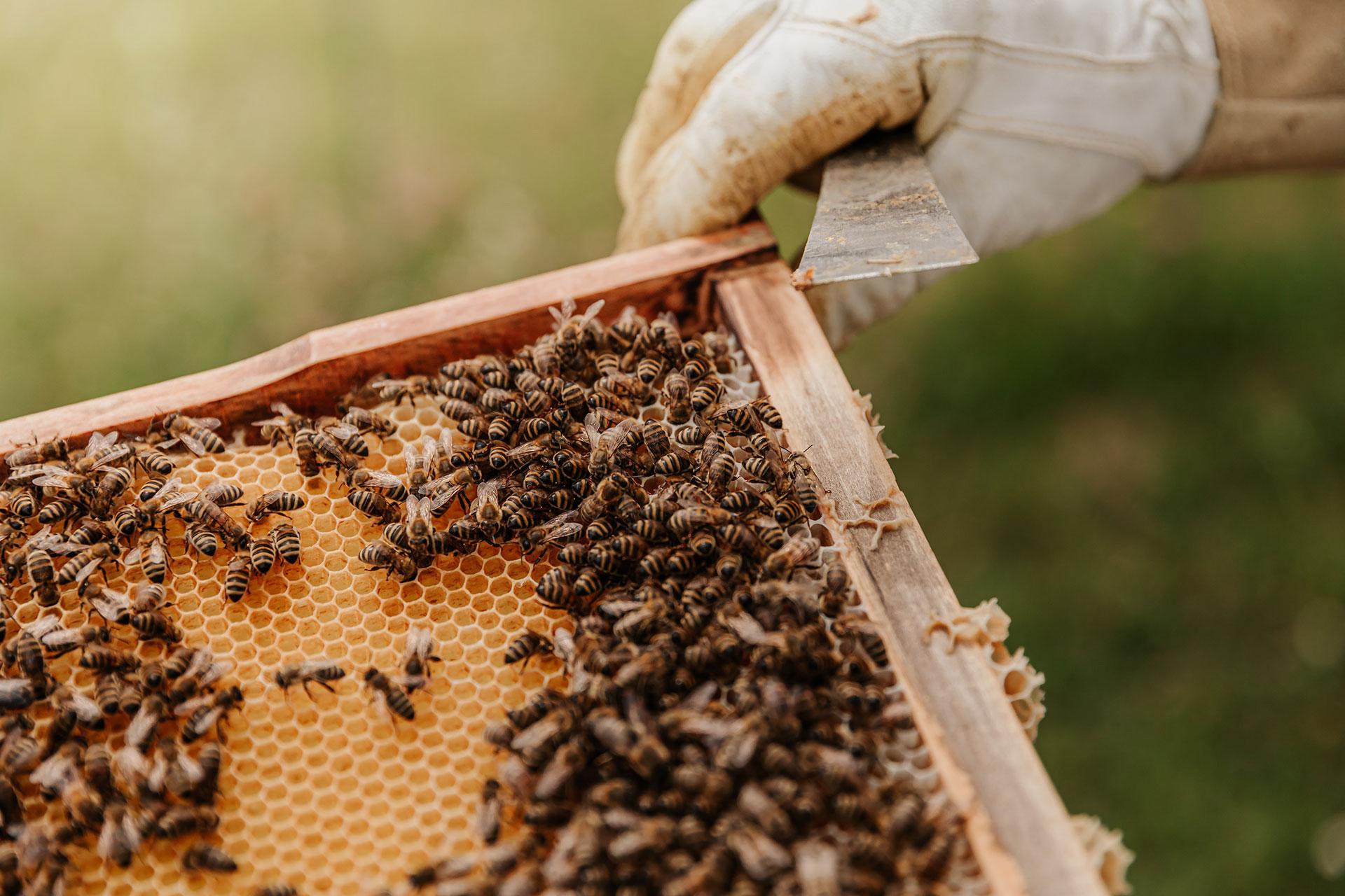 Non sono miele di Markus Imhoof
