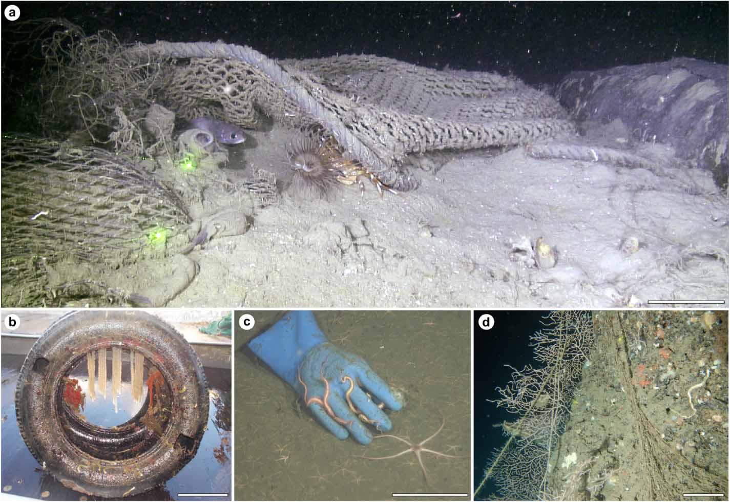 Interazioni tra la fauna marina e i rifiuti.