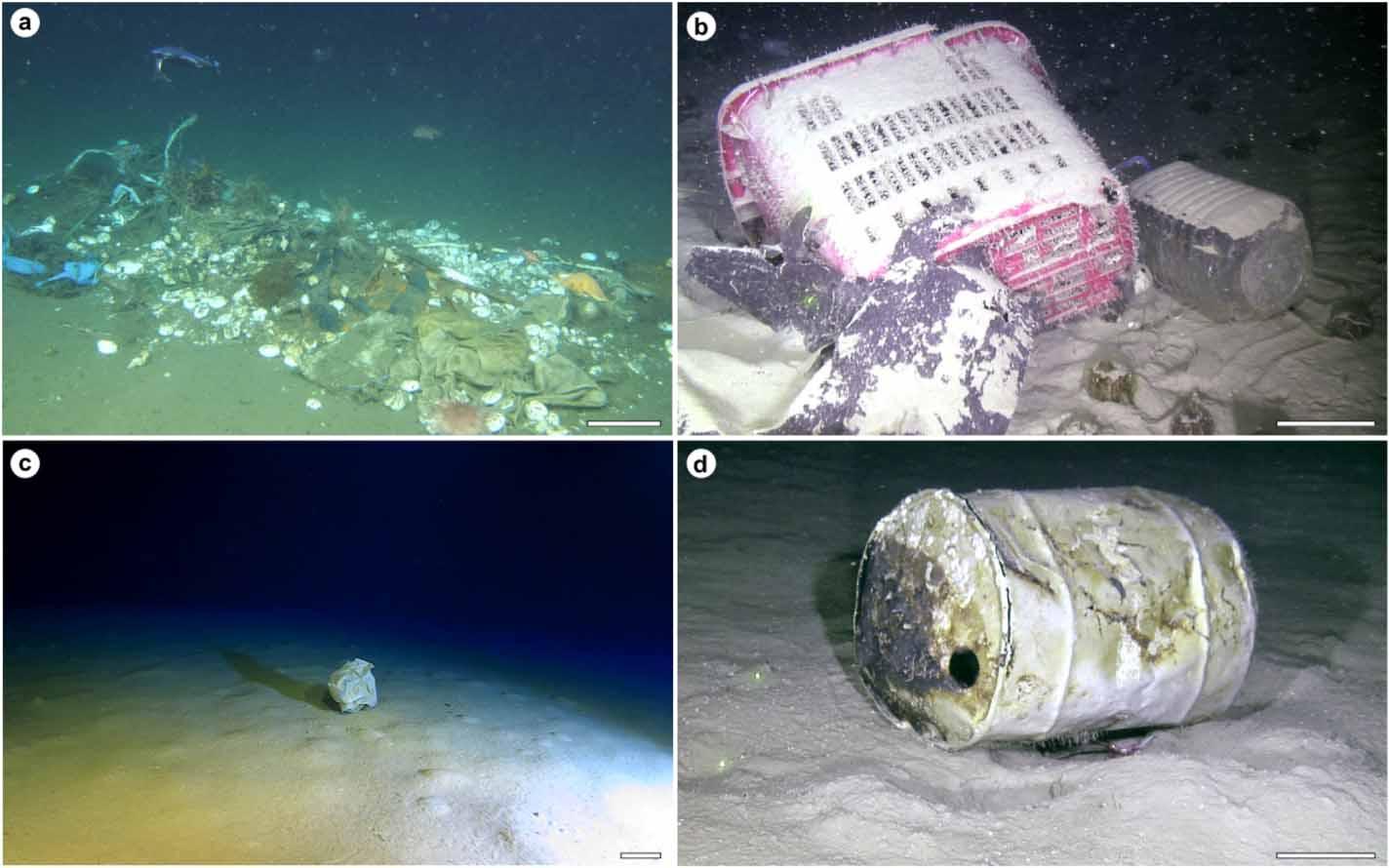 Immagini del fondale marino ottenute grazie a tecnologie come il rov.