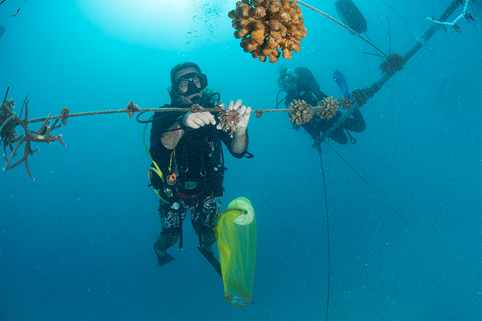 coral restoration alle Maldive, progetto Bicocca