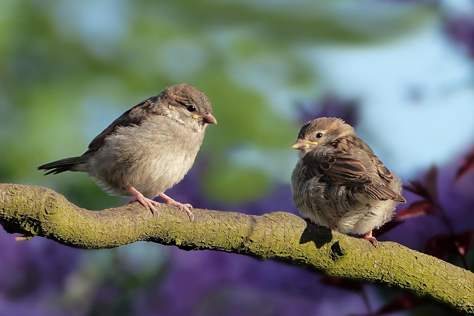 2 uccellini