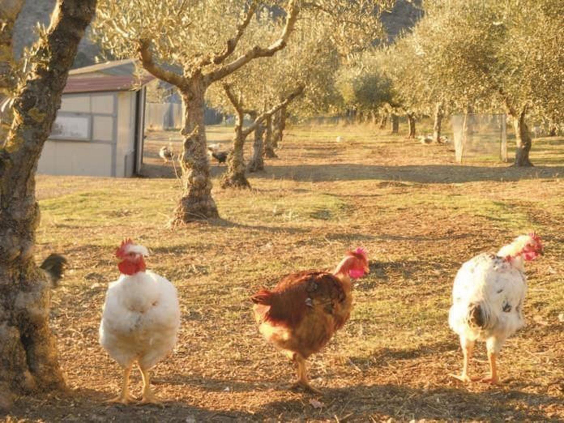 agroforestazione e allevamento
