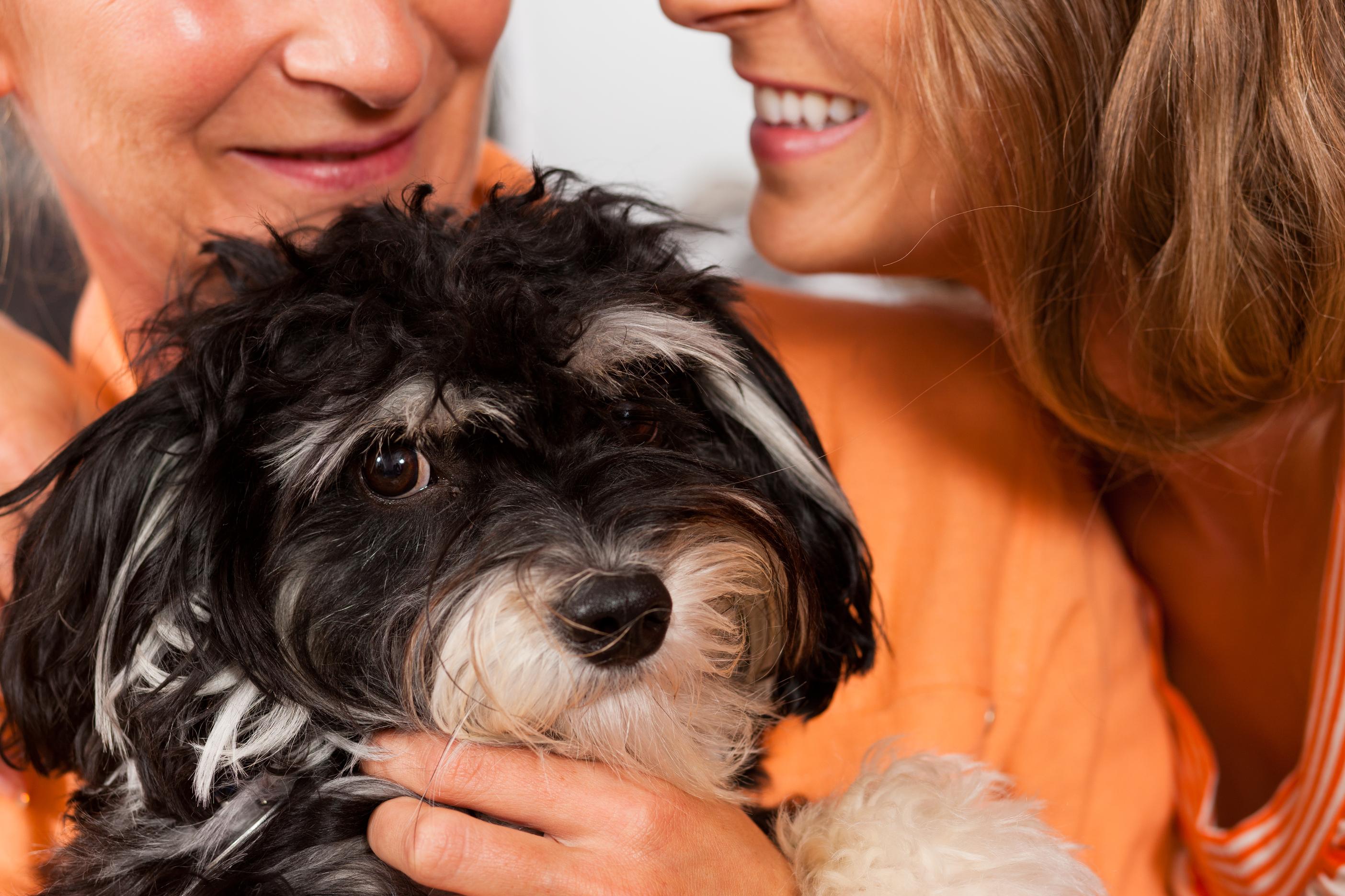 cane e donne ingimage