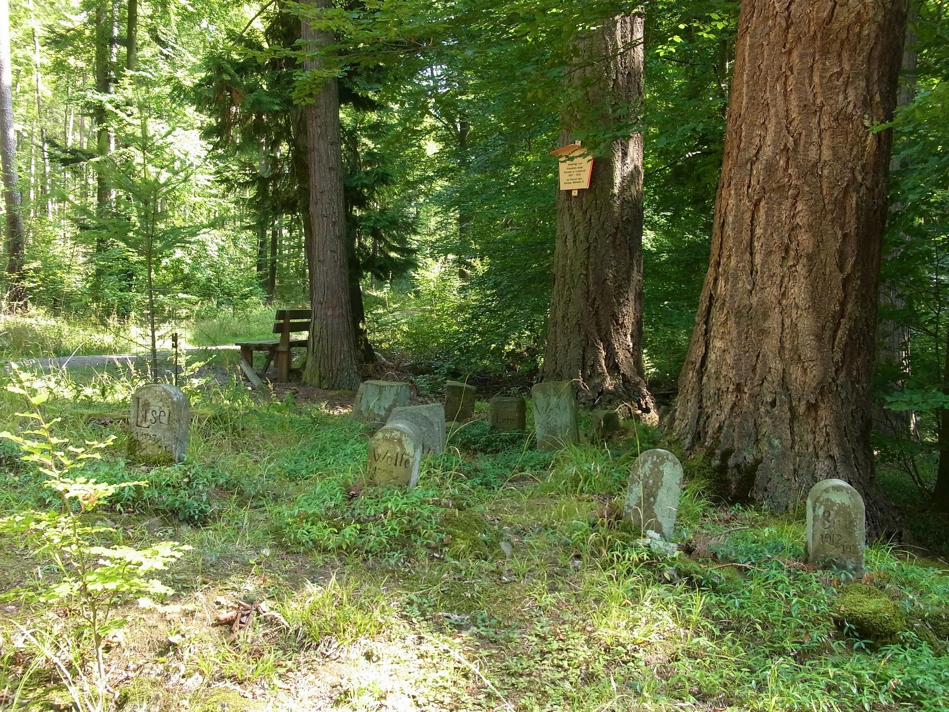 cimitero animai