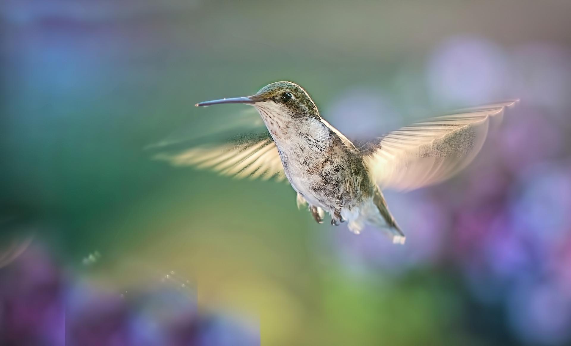 uccellini in volo