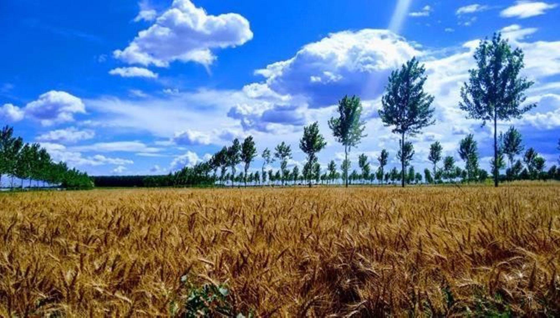 nuovo sistema di agroforestazione