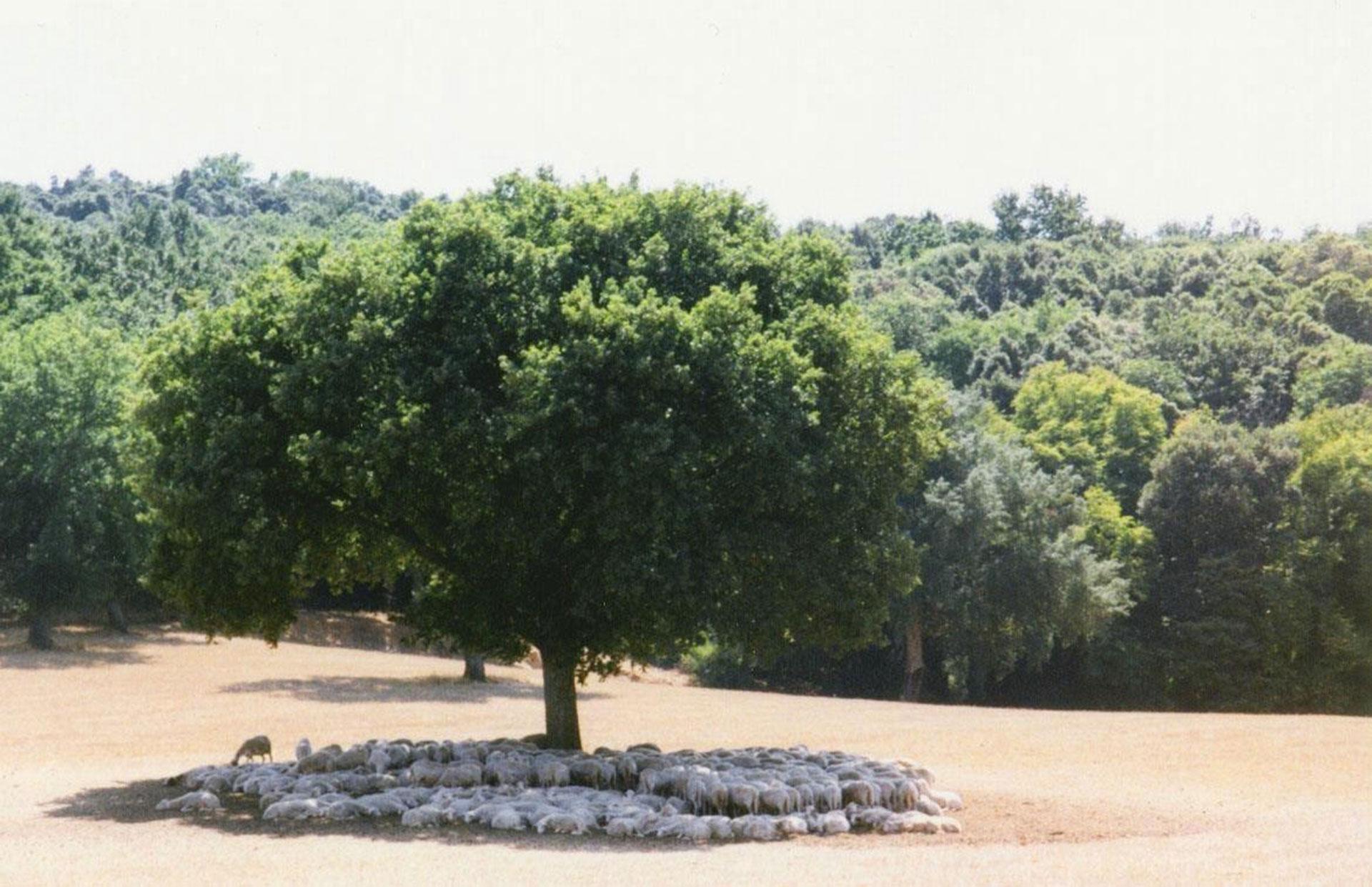 agroforestazione e pascolo