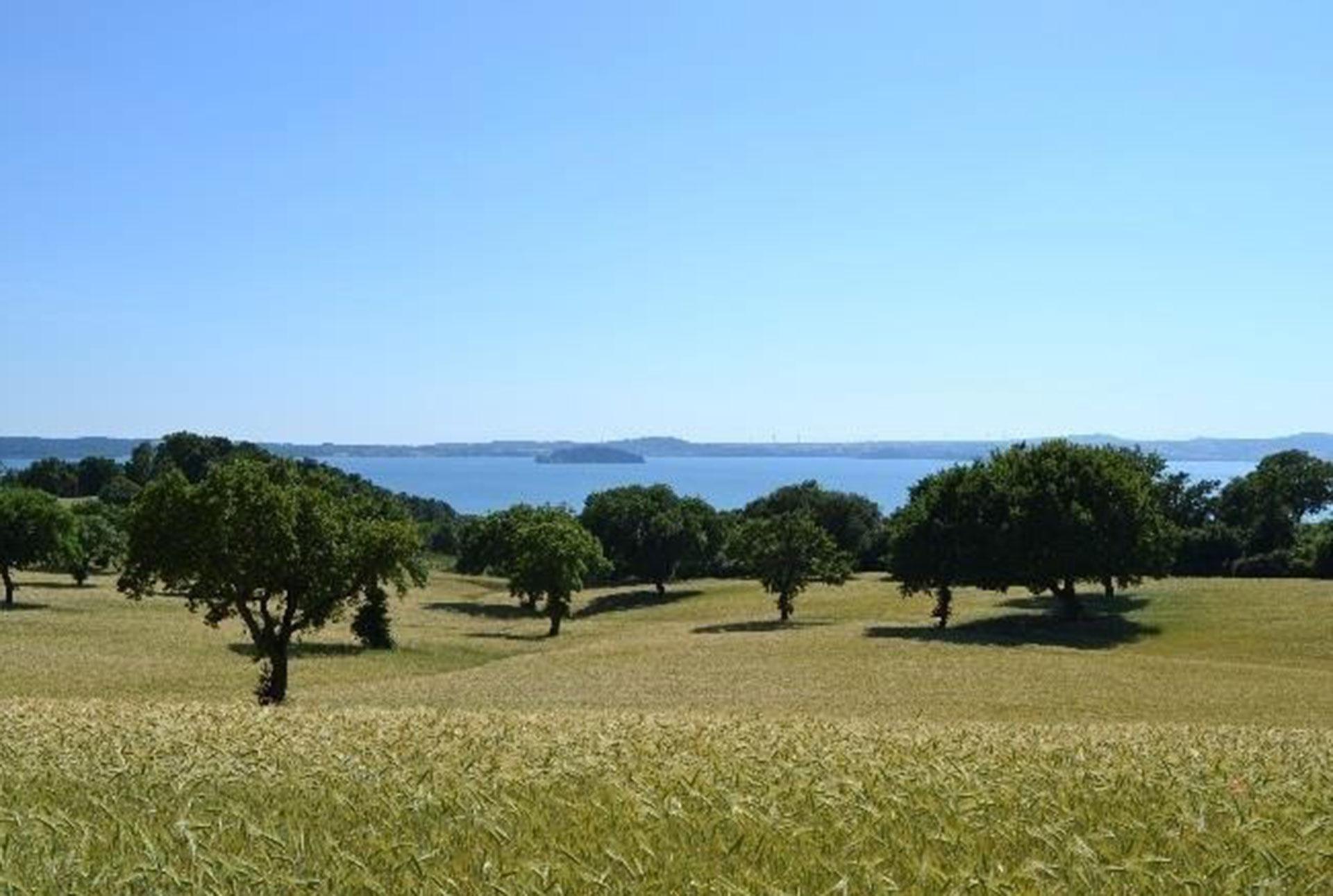 agroforestazione: querce e cereali