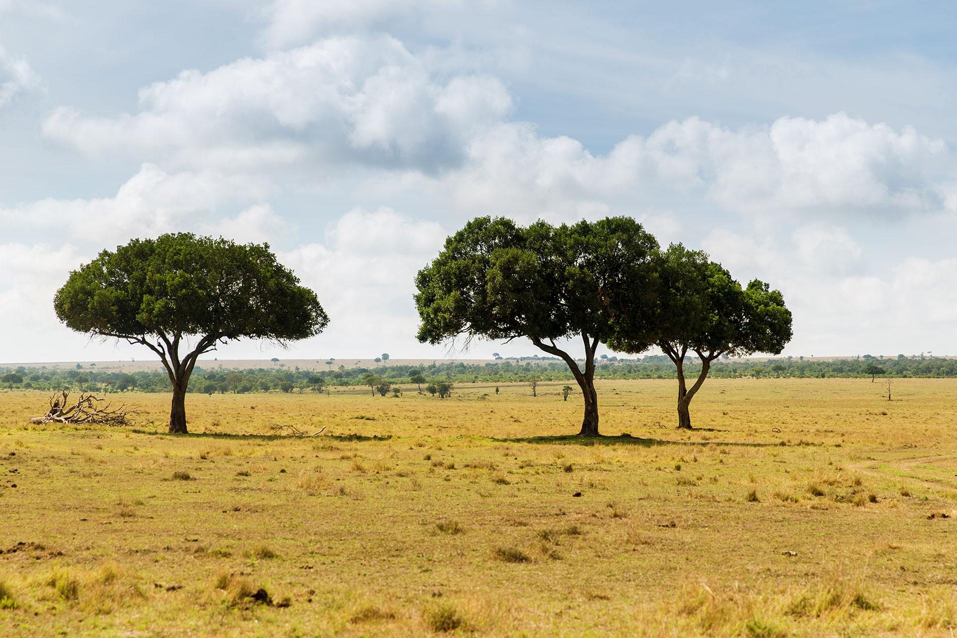 agroforestazione: la savana