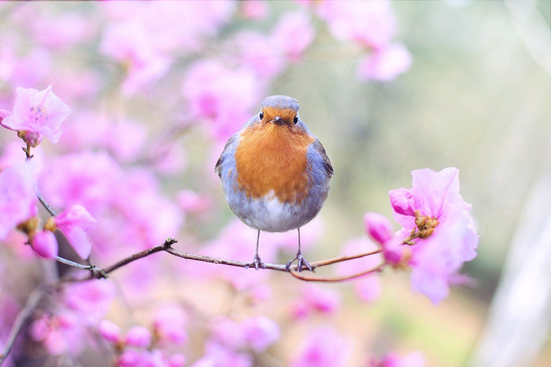 uccellino in primavera