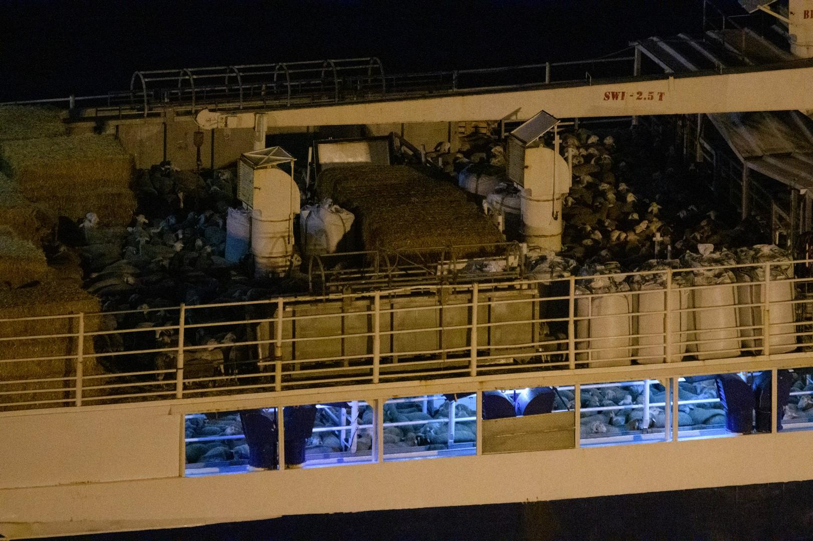 Ancora una volta, il porto di Cartagena, in Spagna, è teatro di tragici avvenimenti che coinvolgono migliaia di animali
