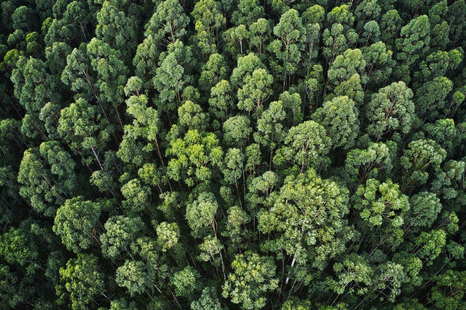 Le etichette indipendenti si impegnano nella riforestazione.