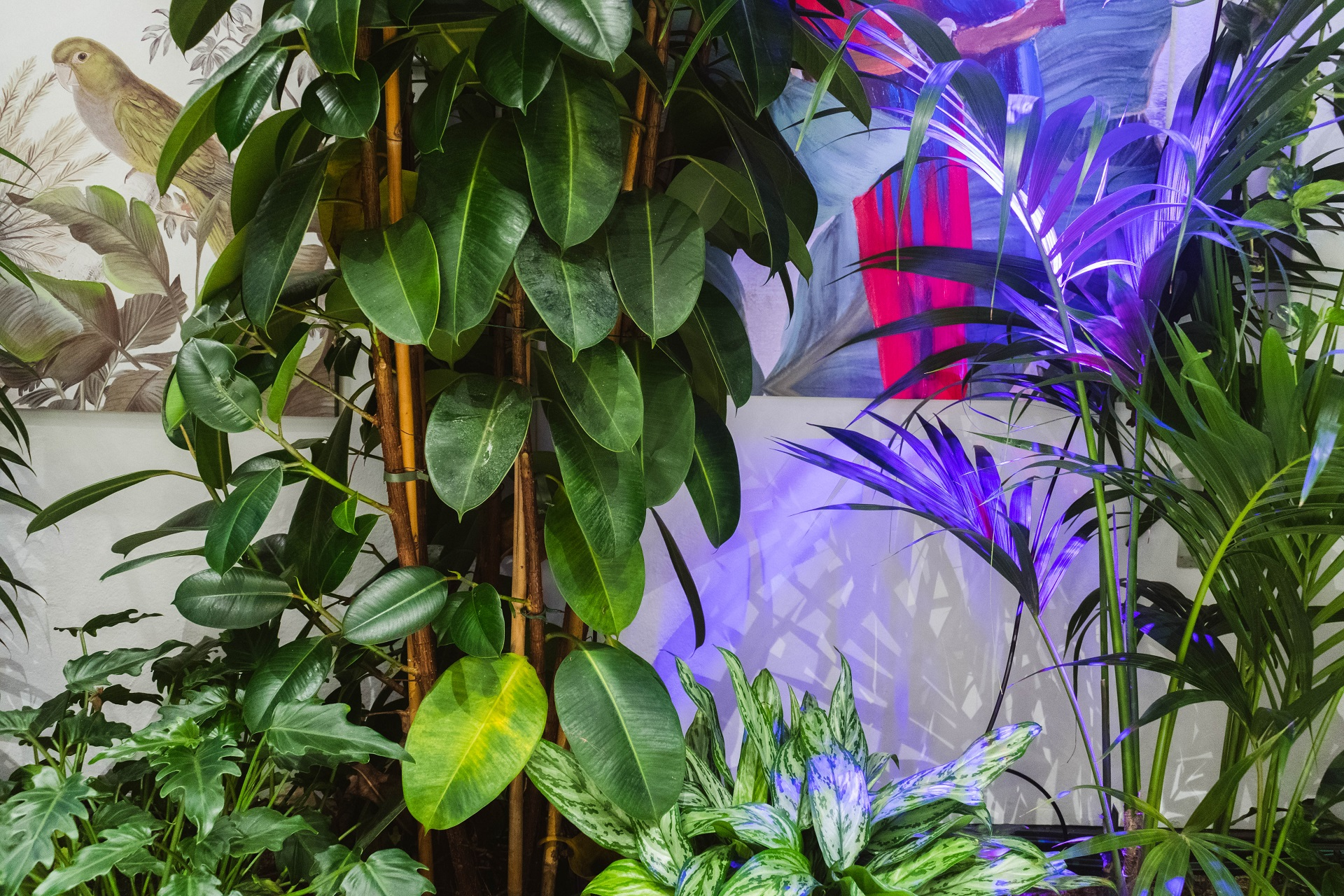 La Fabbrica dell'Aria: piante e tecnologia per il benessere dei nostri polmoni