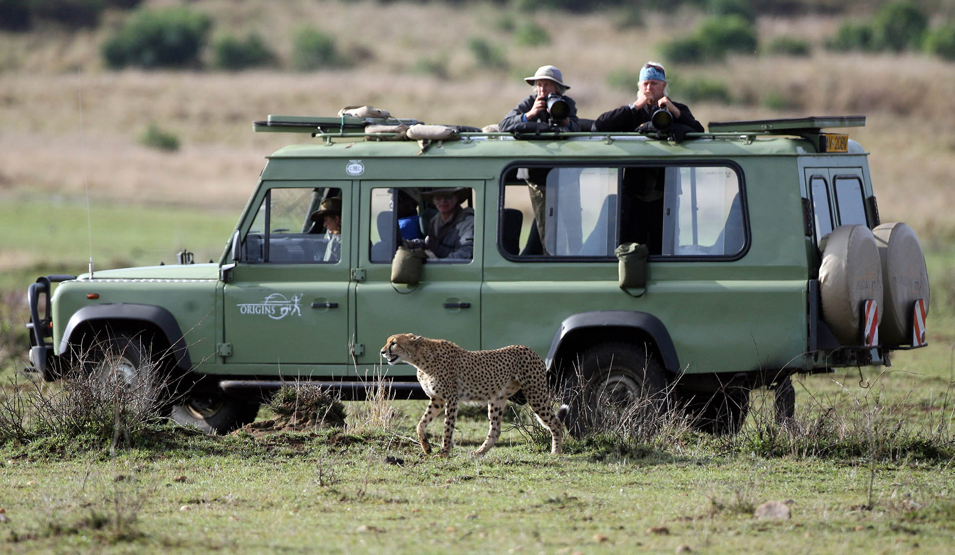 kenya censimento fauna selvatica
