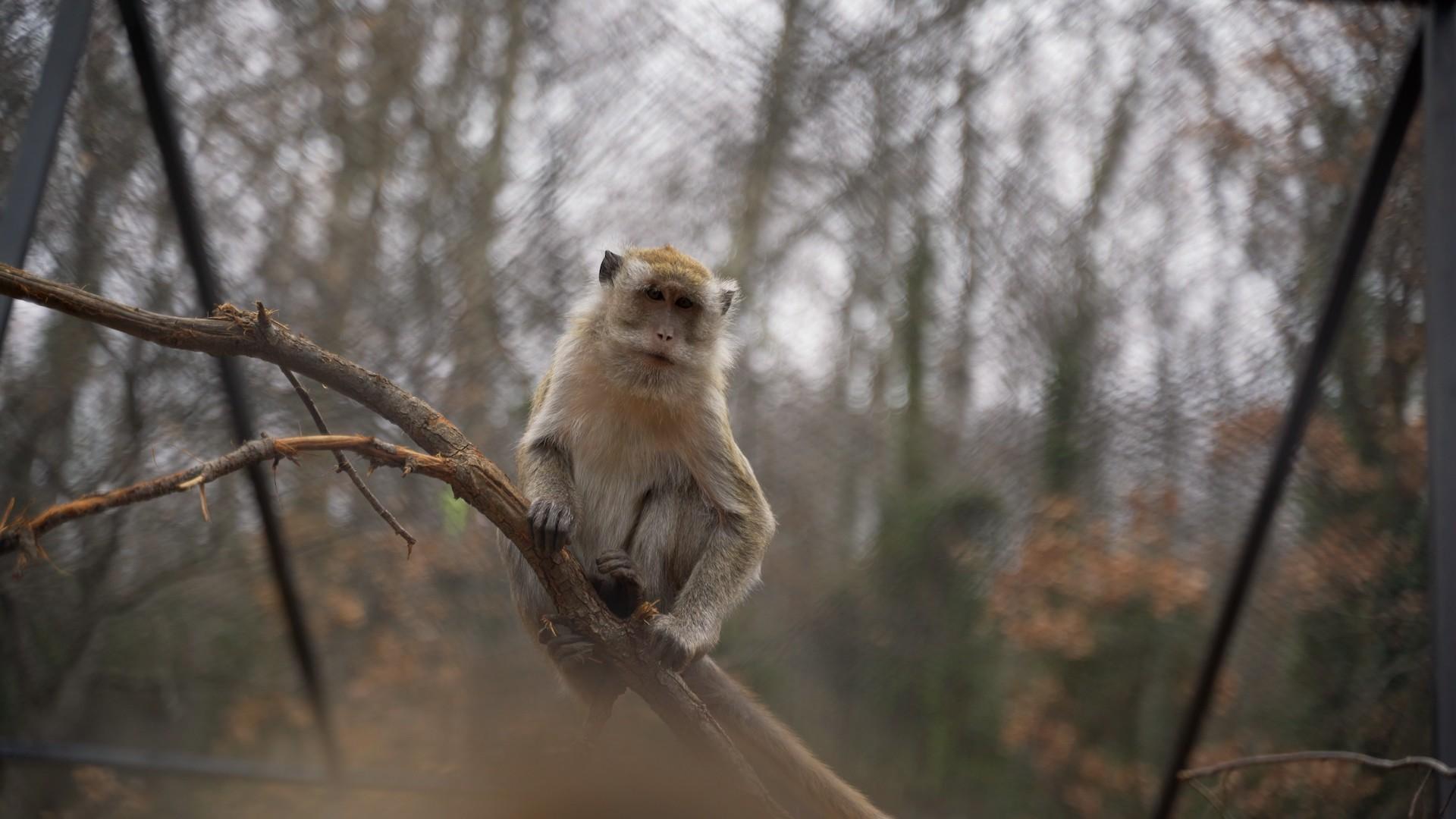 Un macaco arrampicato