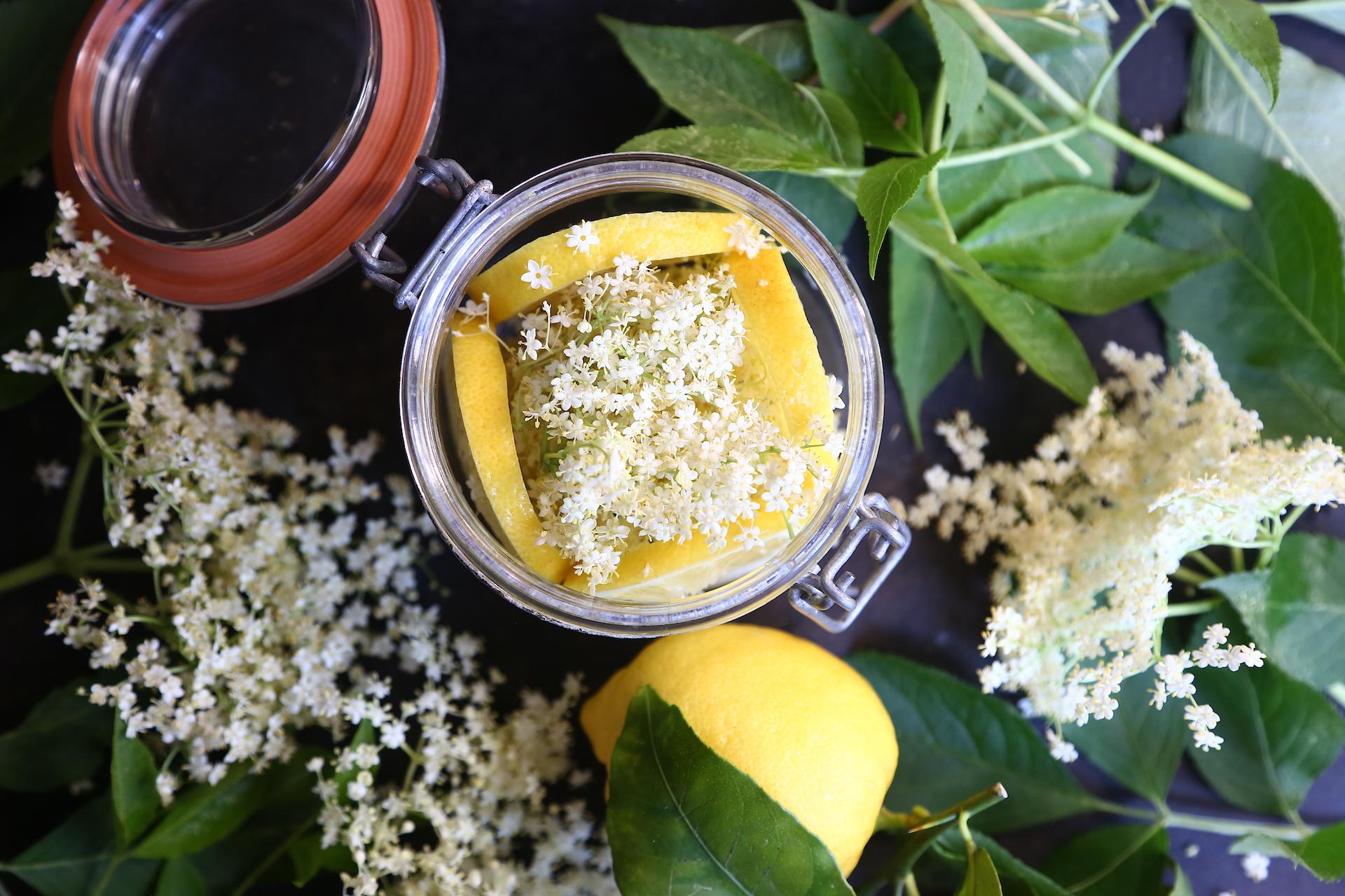 Stratificazione fiori sambuco e limone © Beatrice Spagoni copia