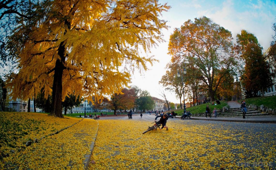 Quali alberi piantare in citt per cambiarne il volto e l 39 aria for Foto di alberi da colorare