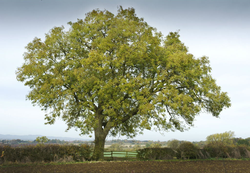 Quali alberi piantare in citt per cambiarne il volto e l 39 aria for Citta tedesca nota per le fabbriche di auto