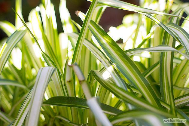 Piante Ufficio Ossigeno : Le piante ideali per la camera da letto pollicegreen