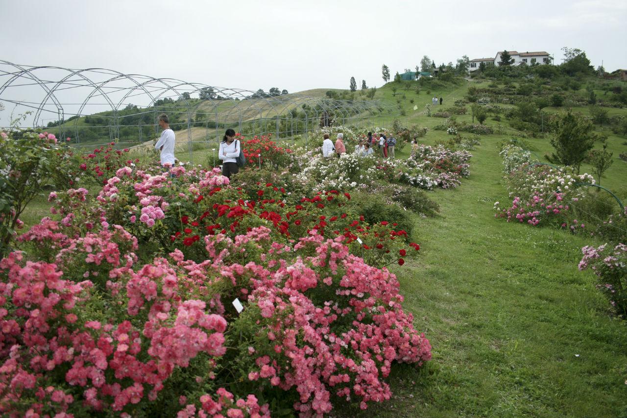 Il bellissimo giardino di rose a città della speranza cancer