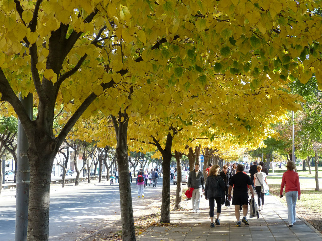 Alberi Ornamentali Da Giardino quali alberi piantare in città per cambiarne il volto e l'aria
