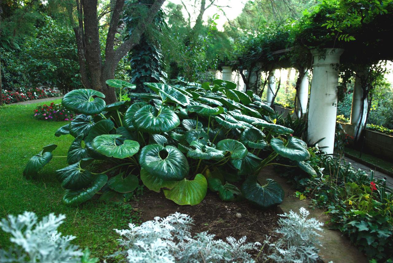 Battesimo in giardino con siepi sempreverdi da giardino for Migliori alberi da giardino