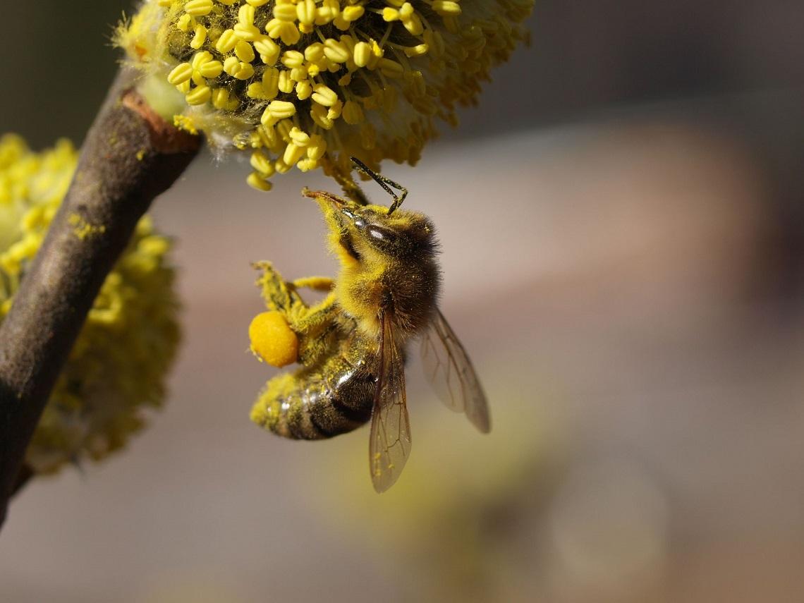 20 Maggio : giornata delle api :