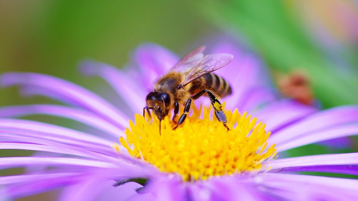 Risultato immagini per ape fiore