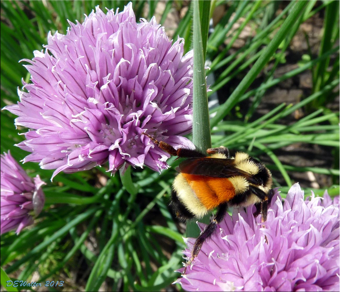 10 piante da coltivare per attirare le api e nutrirle for Piante e fiori