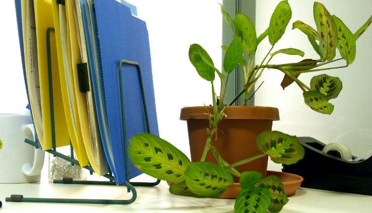 Piante Ufficio Ossigeno : Piante ed ambienti