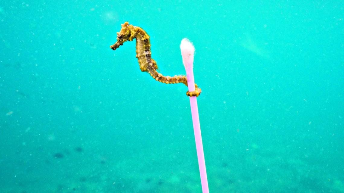 Siamo in un mare di plastica 100 milioni di cotton fioc for Immagini di cavalluccio marino