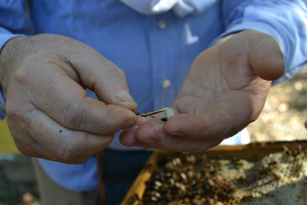 Ispezione di un'arnia. Foto Mediterranean Cobeeration neonicotinoidi