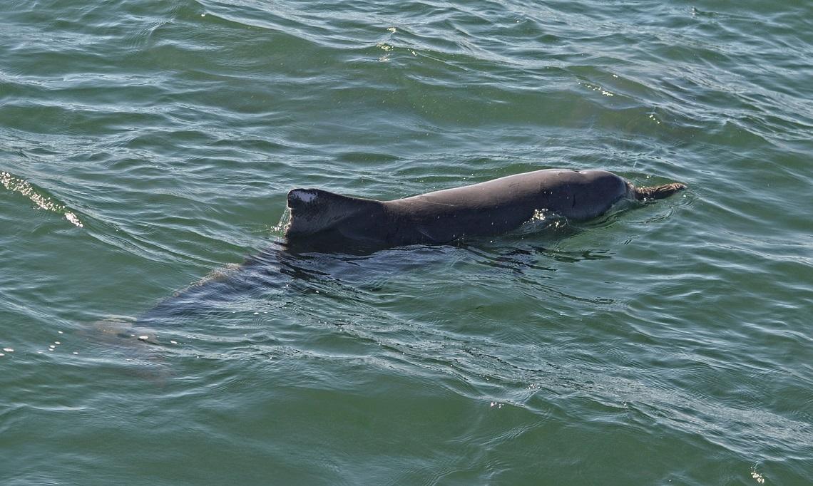Il romanticismo dei delfini un mazzo di spugne come for Disegni del mazzo sul basamento degli scioperi