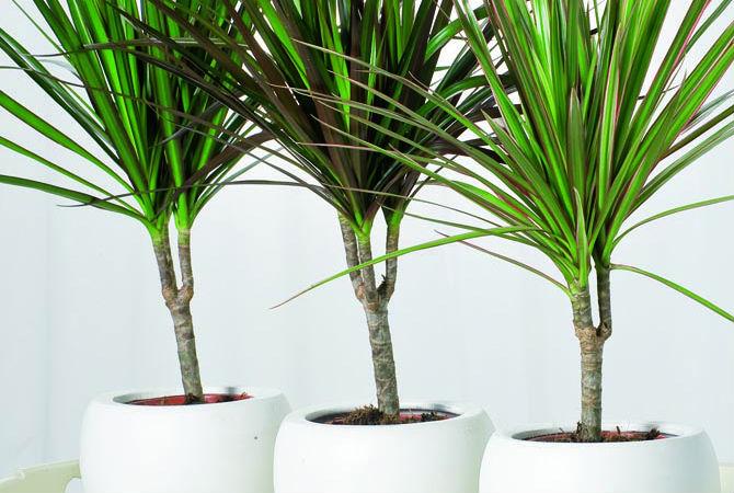 10 PIANTE DA UFFICIO CHE MIGLIORANO L'ARIA E L'UMORE (10 Plants For Office En...