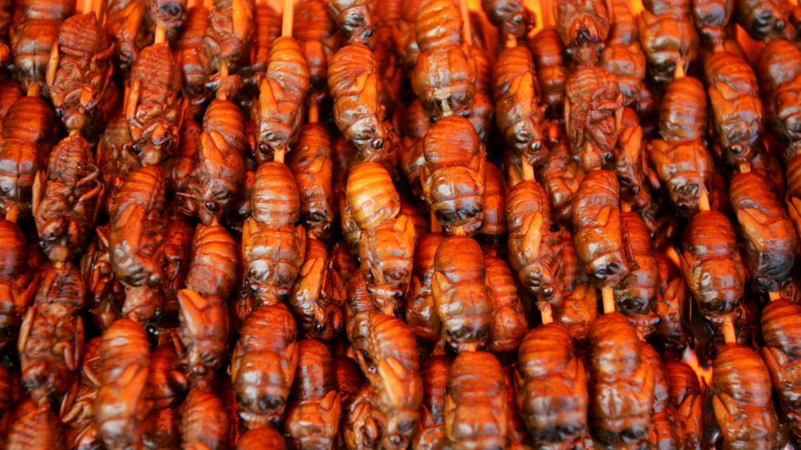 insetti commestibili in vendita dal 2018, cosa ne pensano gli