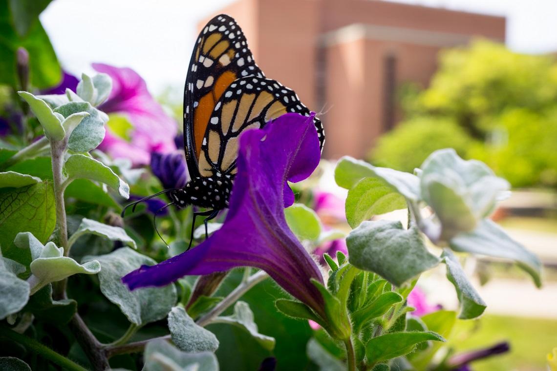 I cieli della california perdono colore dove sono finite - Immagini di farfalle a colori ...