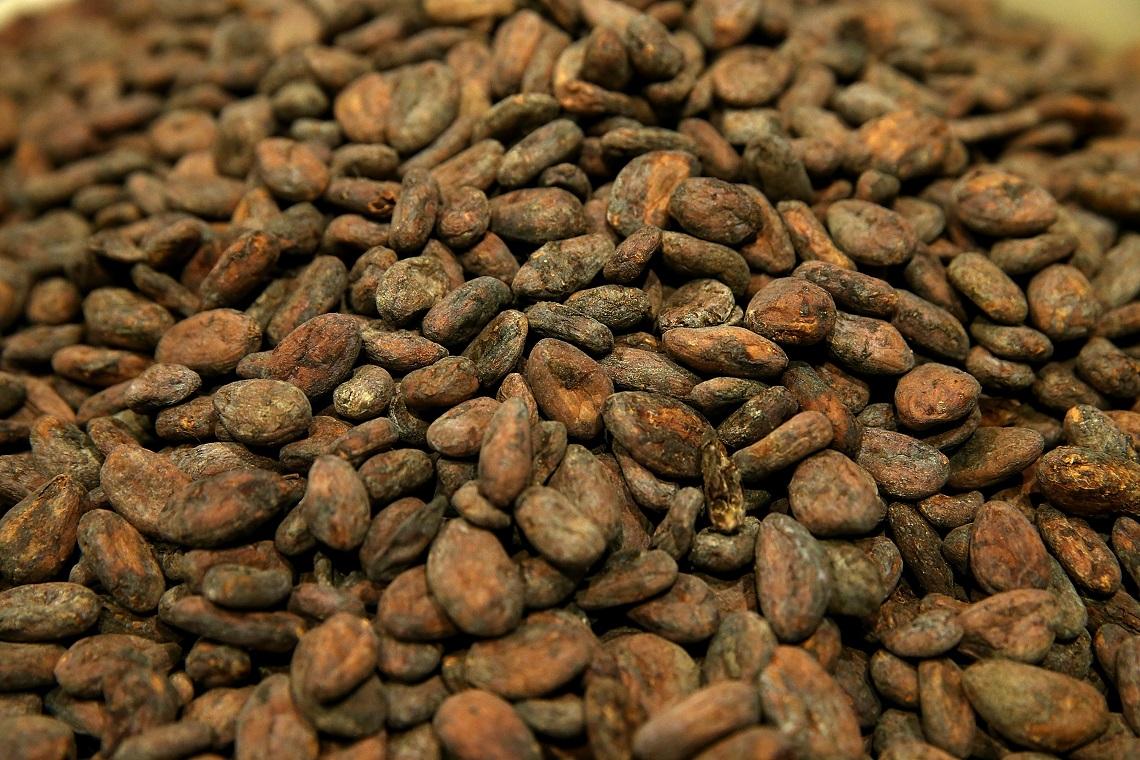 Piante Di Cacao : Mars vuole creare cacao ogm resistente ai cambiamenti