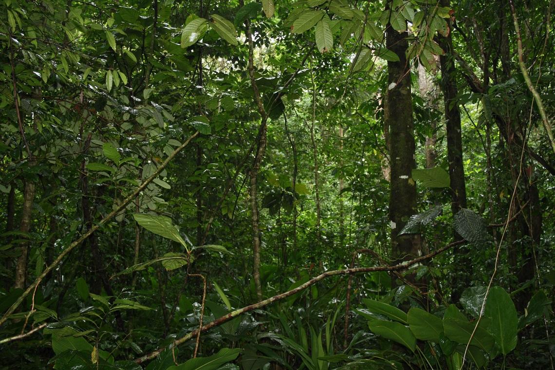 L Informazione Al Servizio Delle Foreste Lifegate