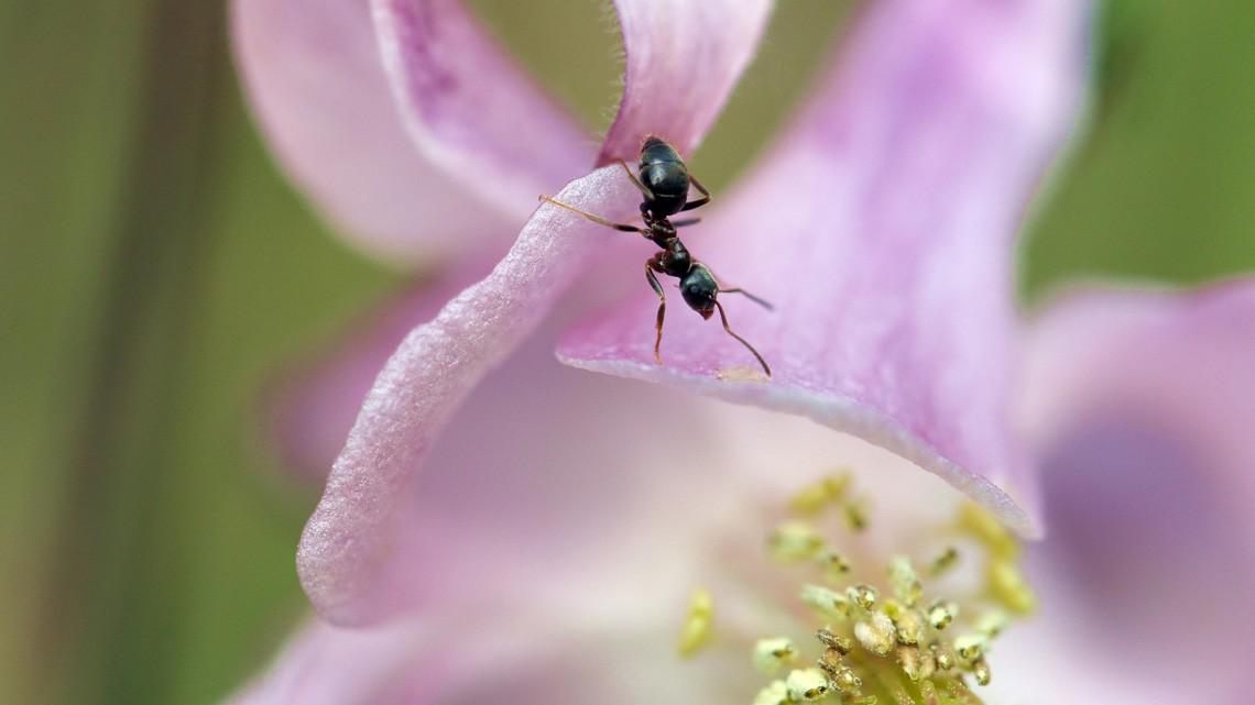 Come allontanare le formiche da casa e dall 39 orto lifegate - Come allontanare le formiche da casa ...