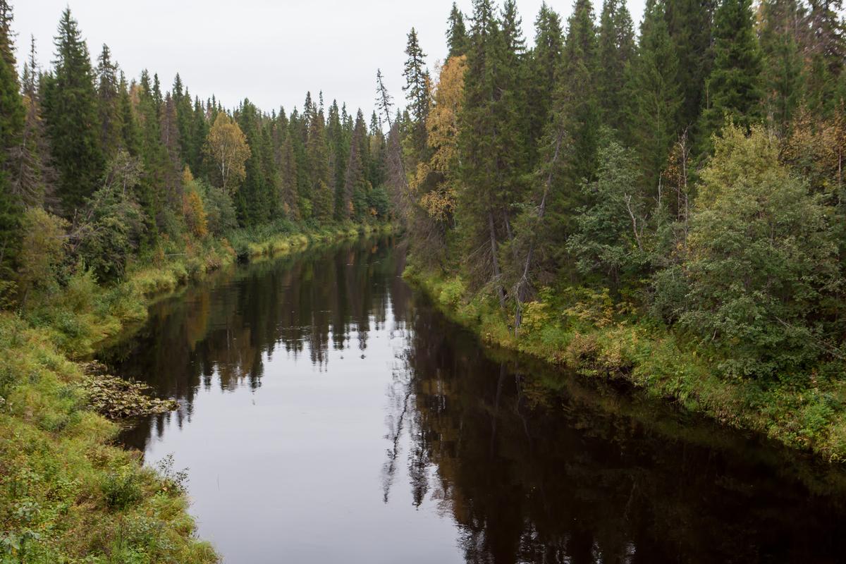 la grande foresta del nord in pericolo per colpa dei