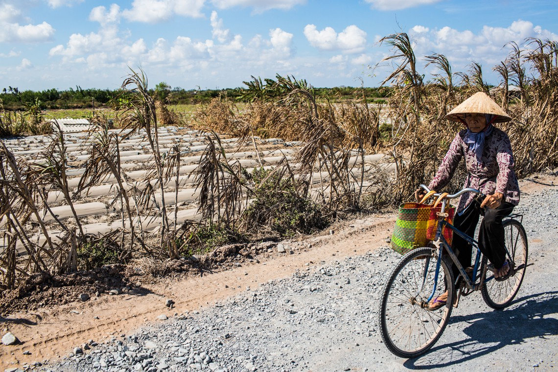 BEN TRE PROVINCE, VIETNAM - MAY 04: A woman cycling by a dried out watermelon field on May 04, 2016 in Ben Tre Province, Vietnam. Vietnam's Mekong Delta had been hit by its worst drought in 90 years caused by the El Nino weather patterns and hydroelectric dams. Based on reports, nearly 140,000 hectares of the Mekong Delta in Vietnam are bone dry and contaminated by salt water, as brine from the sea pushes up the delta's channels. People in affected regions are growing desperate to find water for basic needs and huge amount of the crops for the coming harvest in Vietnam's Mekong Delta, which produces about half of the country's rice, have been spoiled.  (Photo by Christian Berg/Getty Images)